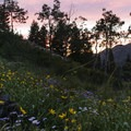Wildflowers and aspen during sunset.- Broads Fork Trail