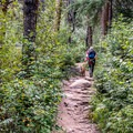 The first part of the trail climbs many switchbacks through mixed forest.- Upper Fish Creek Falls