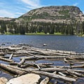 Logs building up on the northeast end of Ruth Lake.- Ruth Lake