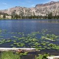Lily pads are common in the many lakes of the Uintas.- Ruth Lake