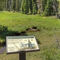 The route has interpretive signs along the trail.- Ruth Lake