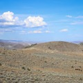 Wild horses in the arid mountains along the trail.- Comstock Mining Loop