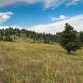 The meadows along the ride are expansive.- Centennial Cone