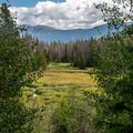 High mountain meadow.- Lower Boulder Lake