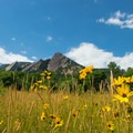 Summer flowers and the First Flatiron in Chautauqua Park.- First Flatiron