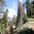 The early parts of the Little Baldy Trail.- Little Baldy
