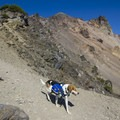 Not a bad idea to have your dog carry its own water!- Mount McLoughlin