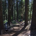 The first and last couple of miles of the trail leads through the woods.- Mount McLoughlin