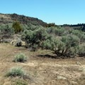 The brown earth and sagebrush remind you that you're in the Idaho desert.- Caldron Linn