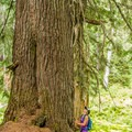 Big trees in the Callaghan Valley.- Rainbow Lake + Madeley Lake Hike