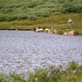 A hiker walks along the alpine tundra shoreline of Linkins Lake. - Linkins Lake Trail