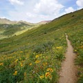 Wildflowers along the trail to Frigid Air Pass.- Four Pass Loop