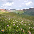Fravert Basin wildflowers. - Four Pass Loop