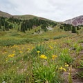 Wildflowers near Buckskin Pass. - Four Pass Loop