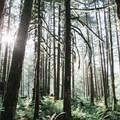 Sun shining through the moss-covered rainforest. - Gold Creek Falls, Lower Falls Trail