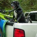 Dogs are allowed on the trails.- Mount Seymour Trails: Old Buck + Pangor Loop
