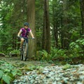 Old Buck is mainly uphill, but it is a two way track.- Mount Seymour Trails: Old Buck + Pangor Loop