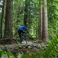 Some of the more vertical sections of Old Buck have been redone. - Mount Seymour Trails: Old Buck + Pangor Loop