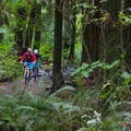Back to Old Buck for another lap or back to the parking lot.- Mount Seymour Trails: Old Buck + Pangor Loop