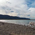 Dogs and children love the lake's pebbly beach.- Ken's Lake