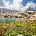 Wildflowers cover the ground along streams in the Blue Lake area.- Mitchell Lake + Blue Lake