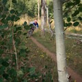 Upper aspen grove.- Stumpjumper / Stumpy