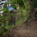Clearing roots in the deep pines.- Stumpjumper / Stumpy