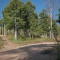 Trail meets the road.- Stumpjumper / Stumpy