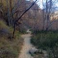 Autumn in the Utah desert.- Lower Calf Creek Falls