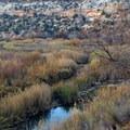 Twilight on the canyon floor.- Lower Calf Creek Falls
