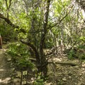Lower section of the McClintock Trail.- McClintock Trail Hike