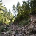 Creek crossing on the McClintock Trail.- McClintock Trail Hike