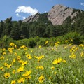 Prairie Sunflower (Helianthus petiolaris) and First through Third Flatiron viewed from the Chautauqua Trail.- Chautauqua Trail Hike