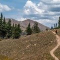 Almost back down to the tree line.- Peak 12,150 Hike