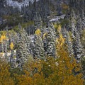 Brilliant fall colors along Utah's Highway 210.- Scenic Highway 210