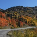 Brilliant fall colors line Highway 210 up past the town of Alta.- Scenic Highway 210