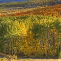 The road to Wasatch Mountain State Park in Midway.- Scenic Highway 190 to Guardsman's Pass