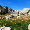 Wildflowers are plentiful around streams and lakes. These are just east of Lake Isabelle.- Long Lake, Lake Isabelle + Pawnee Pass