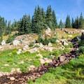 Wildflowers are plentiful around streams and lakes.- Long Lake, Lake Isabelle + Pawnee Pass