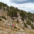 Trail through a bristlecone pine grove.- Mount Evans + Mount Goliath