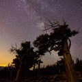 Milky Way behind millenary bristlecone pines with light pollution from Denver on the left.- Mount Evans + Mount Goliath