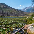 Cub Lake.- The Pool + Cub Lake Loop Hike