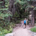 The trail is pleasantly wooded.- Ouzel Falls Hike