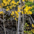 Signs of fall in early September!- Ouzel Falls Hike