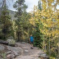 Many aspen along the trail.- Ouzel Falls Hike