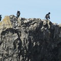 Cormorants at Three Arch Rocks National Wildlife Refuge.- Oceanside + Three Arch Rocks National Wildlife Refuge