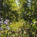 Meeker Park Overflow Campground.- Meeker Park Overflow Campground