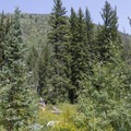 Meadow in Spruces Campground with a view of the north side of Big Cottonwood Canyon.  - Spruces Campground