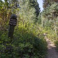 A trail near site 18 takes you to the Donut Falls Trailhead.- Spruces Campground