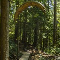 Dreamweaver.- Mount Fromme Mountain Bike Trails: No Quarter + Dreamweaver Loop